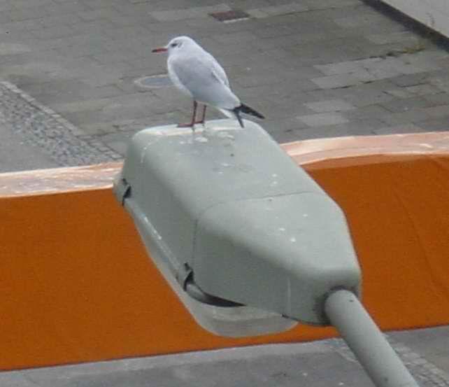 Vogel auf Lampe